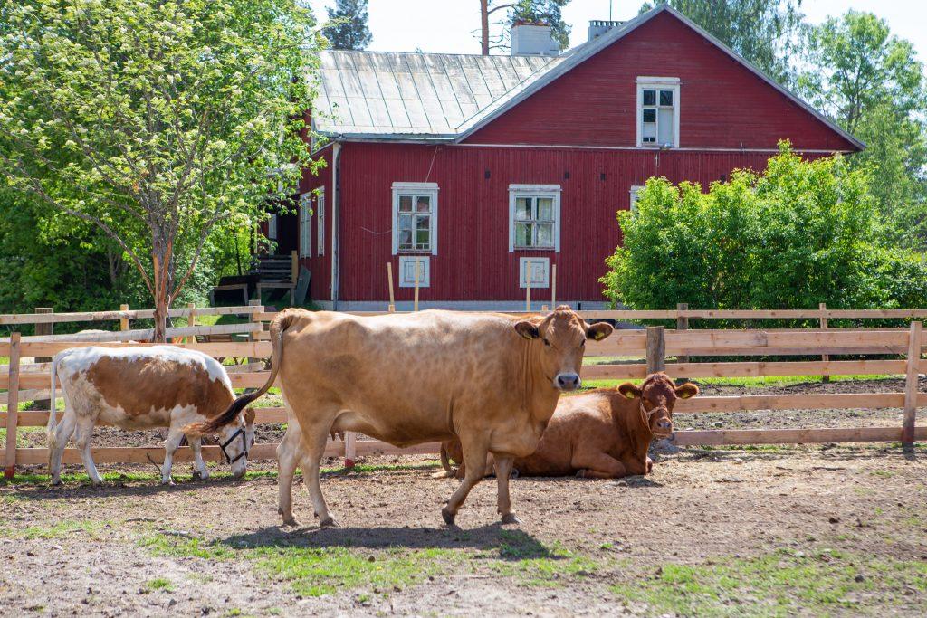 Lehmiä MuuMaassa