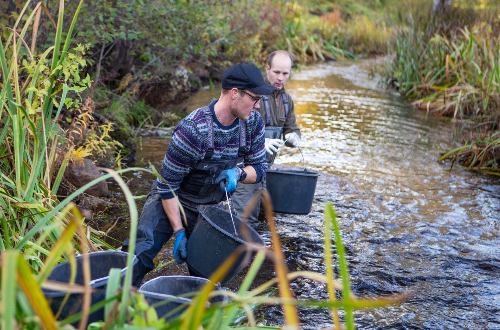 Kaksi miestä kahluuhousut jalassa joessa ämpärit kädessä.
